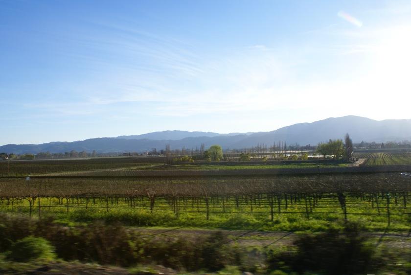 Napa Landscape